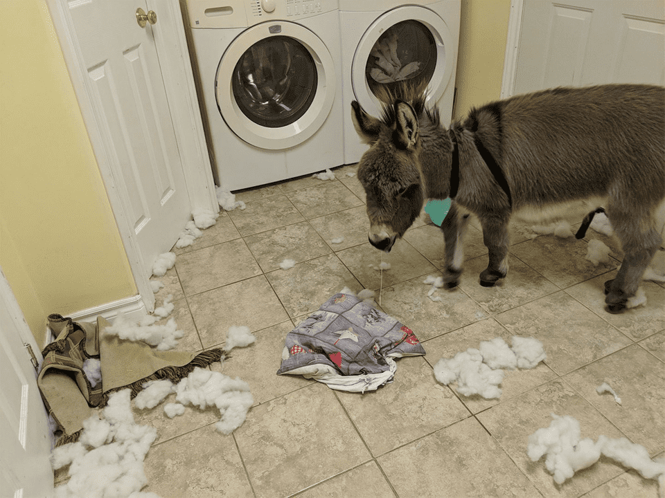 Donkey and a washing machine... What can go wrong?